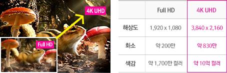 Full HD와 4K UHD의 다람쥐 모습 화질비교